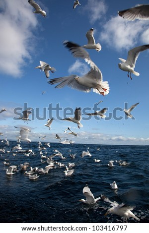 Bass Rock with thousands of gannet birds nesting Firth of Forth Scotland