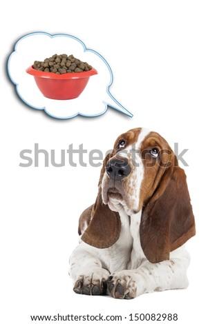 Basset hound dog lying on a white background - stock photo