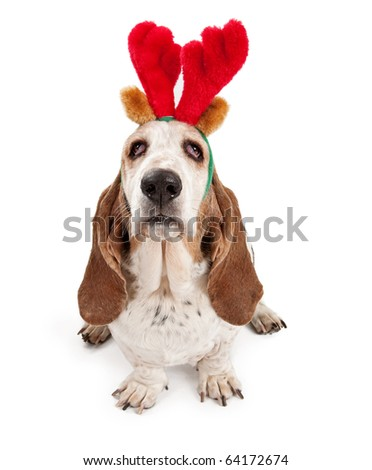 Basset Hound dog wearing reindeer antlers. Isolated on white.