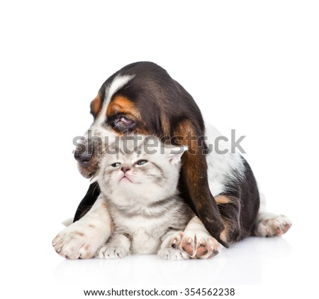 basset hound puppy embracing tiny kitten. isolated on white background - stock photo
