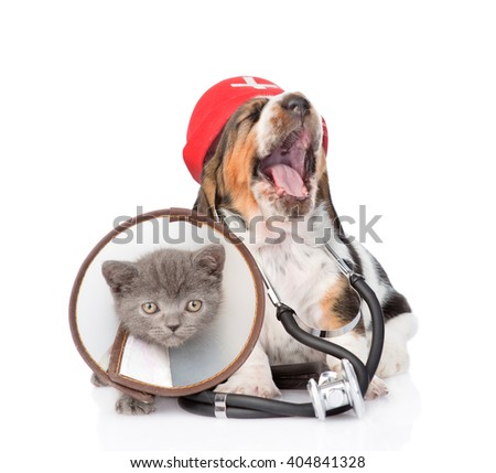 Basset hound puppy with stethoscope on his neck and kitten wearing a funnel collar. isolated on white background.