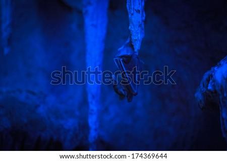 Bat hanging on a stalactite in the dark (Malayan bat) - stock photo