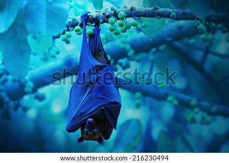 Bat hanging on a tree branch ,Malayan bat - stock photo