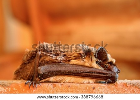 Bat lying on the ground - stock photo