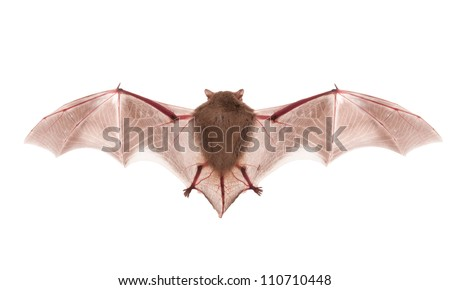 bat on the white background - stock photo