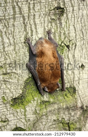 Bat resting on a tree - stock photo