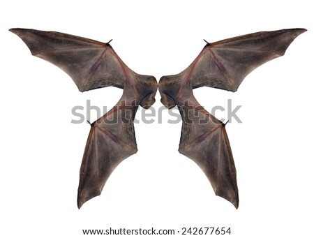 bat wings  isolated on white. - stock photo