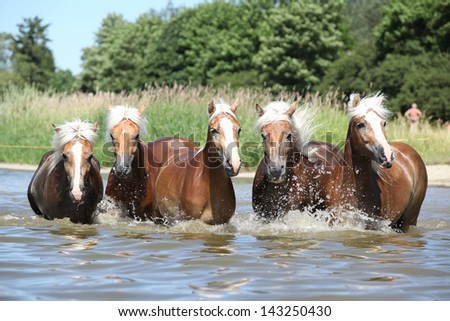 Batch of blond chestnut horses moving in water - stock photo