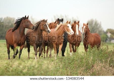 Batch of horses looking on autumn pasturage - stock photo