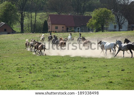 Batch of horses running away in the dust in front of ranch - stock photo