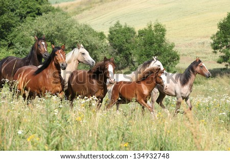 Batch of horses running in flowers on pasturage - stock photo