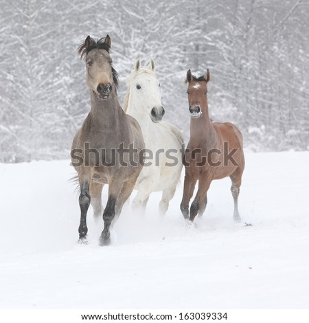 Batch of horses running together in winter - stock photo