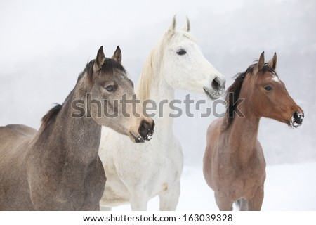 Batch of horses standing together in winter - stock photo