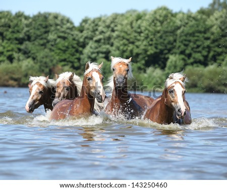 Batch of nice chestnut horses swimming in water - stock photo