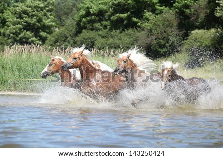 Batch of young chestnut horses running in water - stock photo