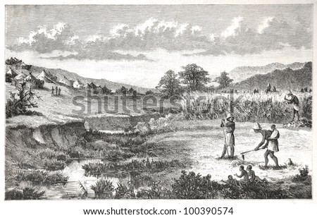 """Batlapine people at farming work, drawn by J. Vanione in Emil Holub's """"Seven Years in South Africa"""", published in Vienna, 1881 - stock photo"""