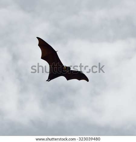 Bats flying in sky background - stock photo