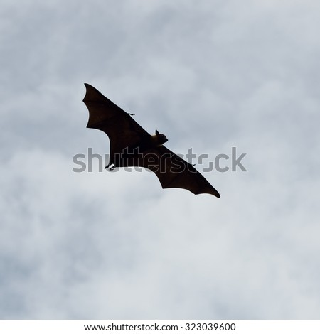 Bats flying in sky background
