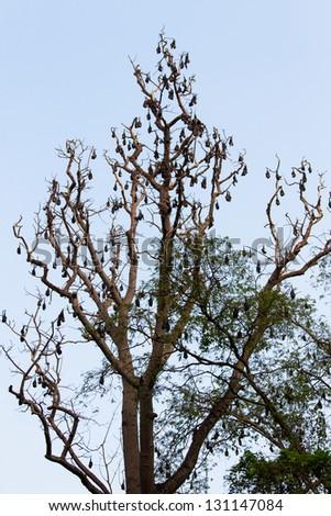 Bats on the dead tree - stock photo