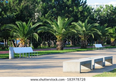 Batumi palm-lined boulevard  - stock photo