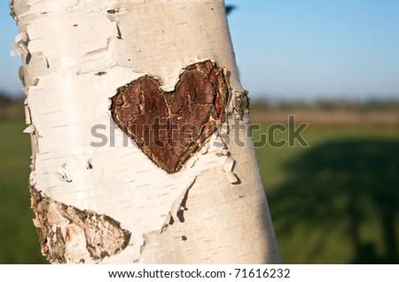 Baum, Herz, Liebe - stock photo