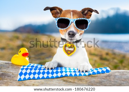 bavarian dog with glasses and a yellow plastic duck - stock photo