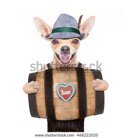 bavarian german chihuahua dog with  gingerbread and hat, behind barrel,  isolated on white background , ready for the beer celebration festival in munich