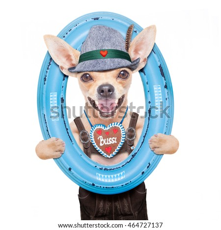 bavarian german chihuahua  dog with  gingerbread and hat,  isolated on white background , ready for the beer celebration festival in munich, inside a frame on the wall
