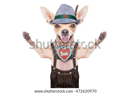 bavarian german chihuahua  dog with  gingerbread and pretzel, isolated on white background , ready for the beer celebration festival in munich
