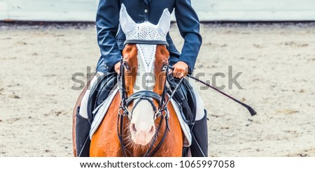Blue ribbon award stock images royalty free images vectors bay dressage horse with blue eye and rider in uiform performing jump at show jumping competition yadclub Images