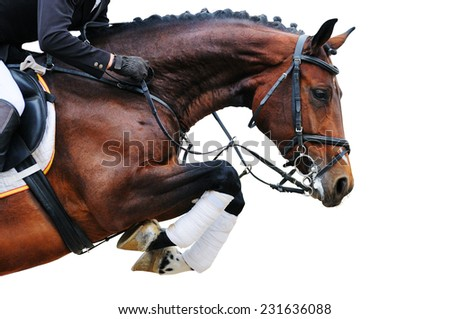 Bay horse in jumping show, isolated on white background - stock photo