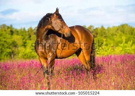 Bay horse portrait in pink flowers in summer - stock photo