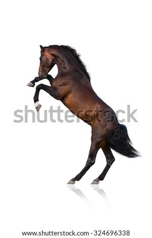 Bay horse rearing up isolated on black - stock photo