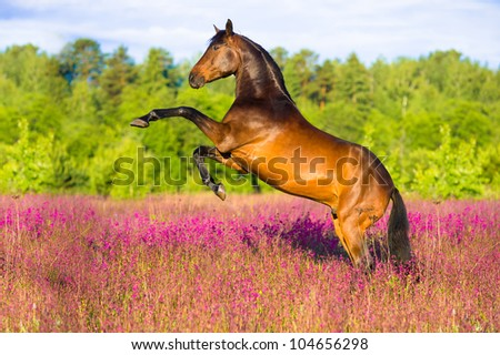 Bay horse rearing up on flowers background in summer time - stock photo