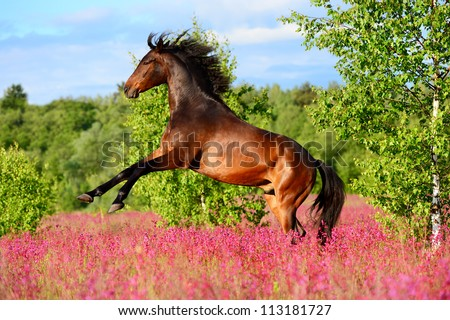 Bay horse rearing up on the pink flowers in summer time