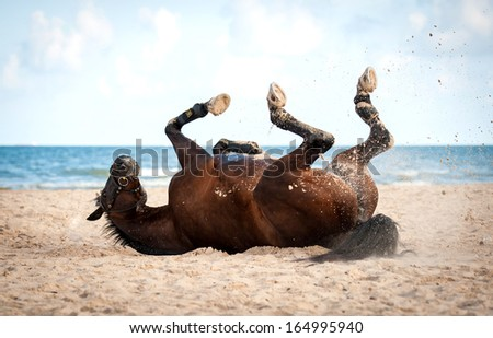 Bay horse rolling on the beach - stock photo
