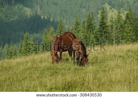 Bay horse with foal grazes in the mountains at sunny day, natural background - stock photo
