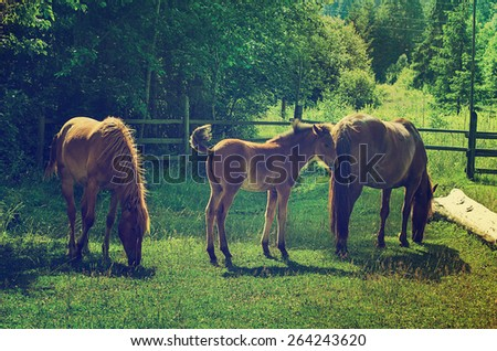 Bay horses with foal grazes on the green mountains meadow, natural background - stock photo