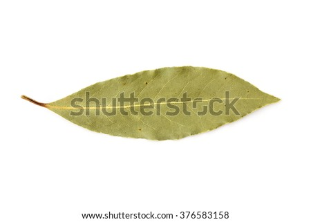 Bay leave isolated