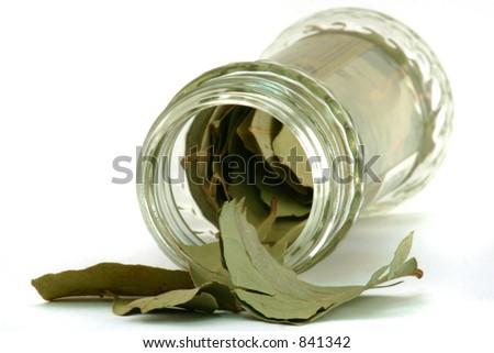 Bay Leaves & Bottle - stock photo