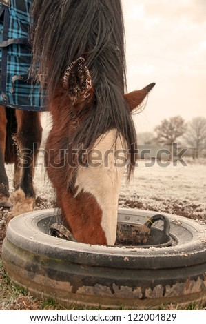 Bay mare eating from a black skip, kept secure from tipping & spills, inside a tyre