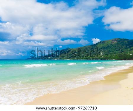 Bay Sea Palms - stock photo