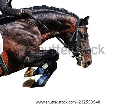 Bay stallion in jumping show, isolated on white background - stock photo