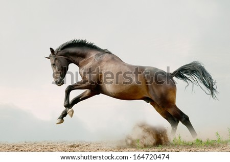 bay stallion plays - stock photo