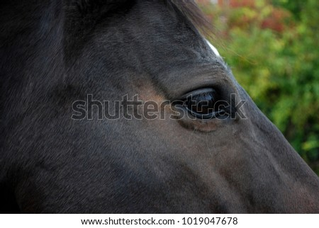 Equine anatomy stock images royalty free images vectors for Thoroughbred tattoo lookup