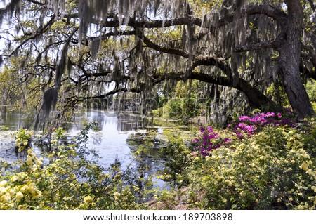 Bayou in the spring - stock photo