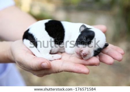be side white and black dogs color in girl hands  - stock photo