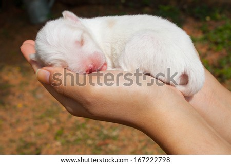 be side white dogs color in girl hands - stock photo