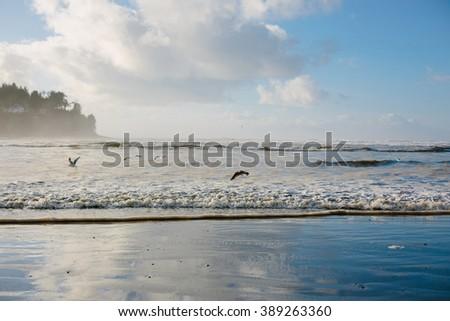 Beach and Blue Sky with Birds - stock photo