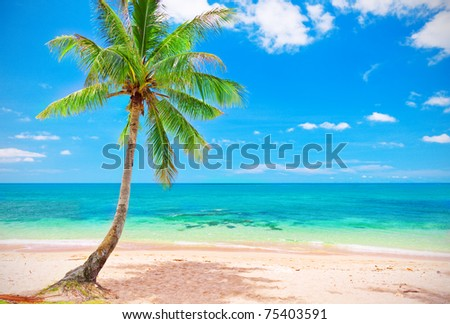 beach and coconut tree